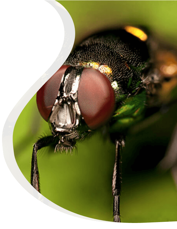 fly treatment - The Pied Piper, London's Leading Pest Control Company