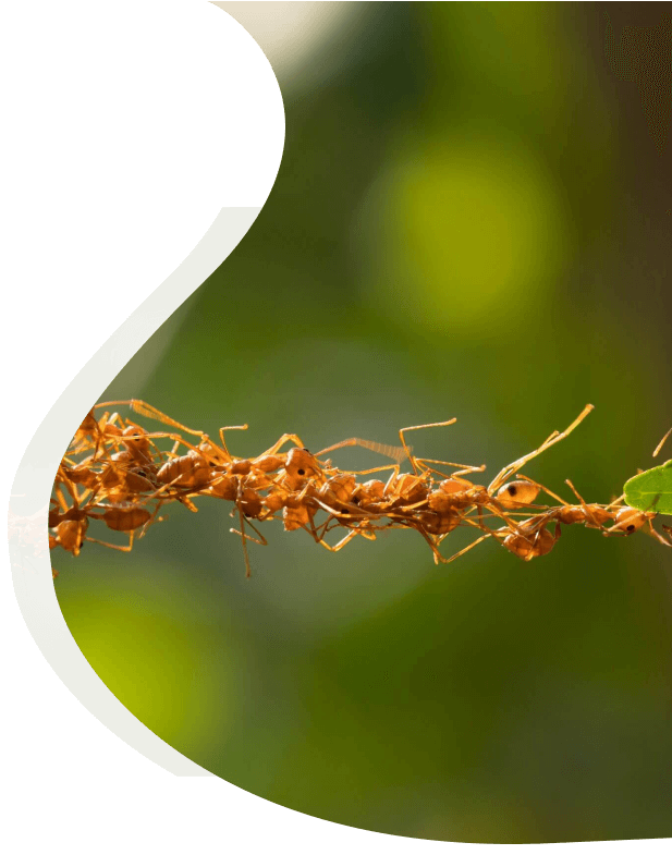 pharaoh ants control for business
