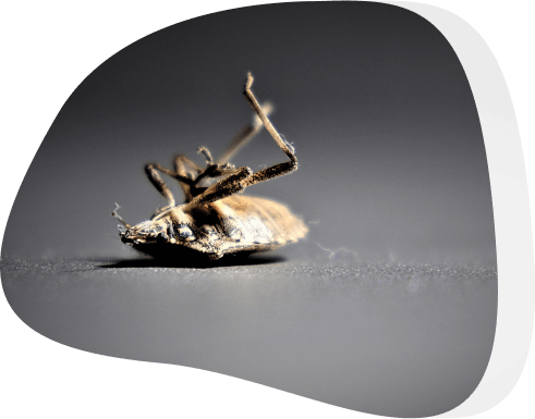 roach treatment - The Pied Piper, London's Leading Pest Control Company