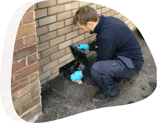 Rats removal - The Pied Piper, London's Leading Pest Control Company