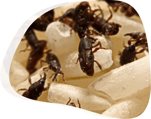 Ants - The Pied Piper, London's Leading Pest Control Company