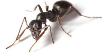 Garden ants Home